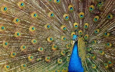 La langue des oiseaux et les rêves